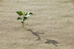 Spruit in het zand Royalty-vrije Stock Foto