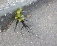 Spruit op asfalt Stock Foto