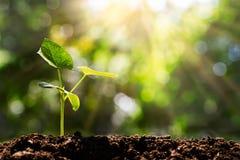 Spruit op vage groene bokeh met zachte zonlichtachtergrond stock foto's