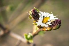 Spruit van boomtakken met vruchten op hun einden stock fotografie