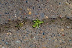 Spruit van gras Stock Afbeelding
