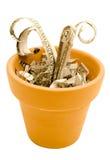 Spruit van papiergeld in pot Royalty-vrije Stock Fotografie