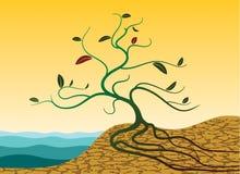 Spruit in woestijn Stock Afbeeldingen