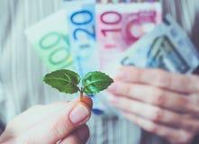 Spruitboom op een achtergrond van geld Royalty-vrije Stock Afbeeldingen