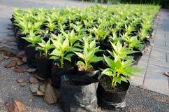 Spruiten die in Landbouwzak groeien Royalty-vrije Stock Fotografie