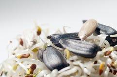 Spruiten en zaden stock afbeeldingen
