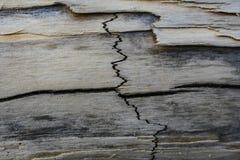 Sprung auf einer getrockneten Niederlassung von einem Baum lizenzfreies stockfoto