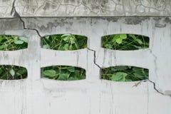 Sprung auf einer Wand Stockfotos