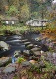 Sprungbrett in einer Herbstwaldszene Lizenzfreie Stockfotos