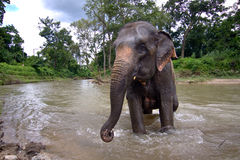 Spruzzata degli elefanti della Tailandia Immagini Stock