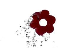 Spruzzata dell'acqua sul fiore rosso Fotografia Stock