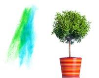 Spruzzata della polvere e dell'albero isolata su bianco Fotografia Stock Libera da Diritti