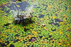 Spruzzata sull'acqua Fotografia Stock