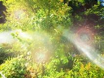 Spruzzatore automatico del giardino nelle piante di innaffiatura di azione immagini stock