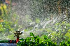 Spruzzatore automatico del prato inglese del giardino nell'erba d'innaffiatura di azione Concetto verde del fondo della natura Fotografie Stock Libere da Diritti