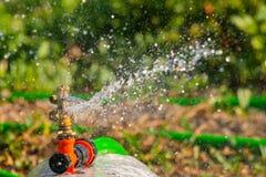 Spruzzatore automatico del prato inglese del giardino nell'erba d'innaffiatura di azione Concetto verde del fondo della natura Immagine Stock