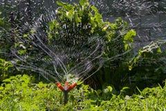 Spruzzatore del giardino Immagine Stock