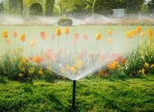 Spruzzatore dell'acqua dell'impianto di irrigazione che funziona nel giardino fotografie stock