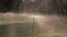 Spruzzatore dell'acqua su un campo in Grecia archivi video