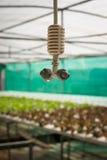 Spruzzatore nell'azienda agricola della verdura di coltura idroponica Immagini Stock
