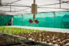 Spruzzatore nell'azienda agricola della verdura di coltura idroponica Fotografia Stock Libera da Diritti