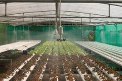 Spruzzatore nell'azienda agricola della verdura di coltura idroponica Fotografie Stock Libere da Diritti
