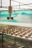 Spruzzatore nell'azienda agricola della verdura di coltura idroponica Immagini Stock Libere da Diritti