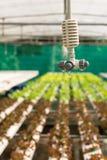 Spruzzatore nell'azienda agricola della verdura di coltura idroponica Fotografia Stock