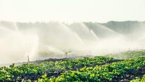 Spruzzatori dell'acqua che irrigano un campo Fotografia Stock