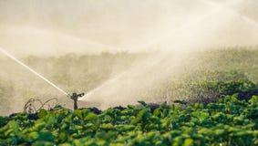 Spruzzatori dell'acqua che irrigano un campo Fotografie Stock