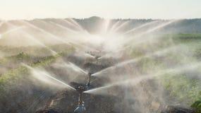 Spruzzatori dell'acqua che irrigano un campo Immagine Stock Libera da Diritti