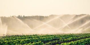 Spruzzatori dell'acqua che irrigano un campo Immagini Stock Libere da Diritti