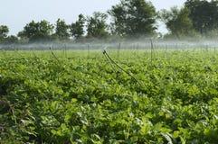 Spruzzatori di irrigazione nel campo Fotografia Stock Libera da Diritti