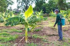 Spruzzatura degli agricoltori dei bananeti Fotografia Stock
