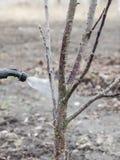 Spruzzatura degli alberi con il fungicida Fotografia Stock