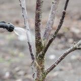 Spruzzatura degli alberi con il fungicida Fotografie Stock