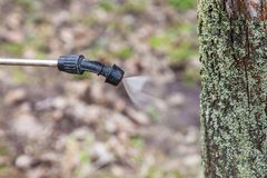 Spruzzatura degli alberi con il sarcasmo del ferro Immagini Stock Libere da Diritti