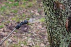 Spruzzatura degli alberi con il sarcasmo del ferro Fotografie Stock