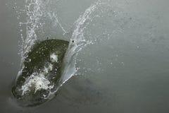 Spruzzatura dell'acqua nell'inverno fotografia stock