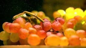 Spruzzatura dell'acqua sopra il mazzo multicolore dell'uva Video di movimento lento eccellente video d archivio