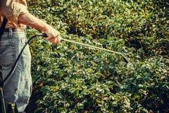 Spruzzatura dell'agricoltore dell'antiparassitario sulla piantagione della patata Fotografie Stock Libere da Diritti