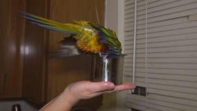 Spruzzatura di seduta del pappagallo variopinto dell'uccello nel bagno archivi video