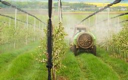Spruzzatura fogliare in il frutteto di primavera Fotografie Stock