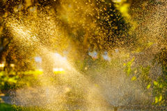 Spruzzi nel parco Gocce di acqua sulle piante Fotografia Stock