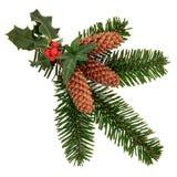 Spruzzo decorativo di inverno Fotografia Stock
