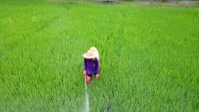 Spruzzo dell'agricoltore sull'azienda agricola del riso archivi video