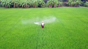 Spruzzo dell'agricoltore sull'azienda agricola del riso video d archivio