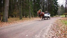 Sprzężny koń jedzie w parku wzdłuż śladu zbiory