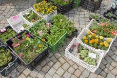 Sprzedaż rozsady kwiaty przy rynkiem w Czeskim miasteczku Trebic zdjęcia royalty free