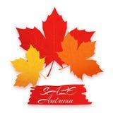 Sprzedaży jesień Wektorowa ilustracja z kolorowymi jesień liśćmi Może używać dla ulotek, sztandary, plakaty Ilustracji
